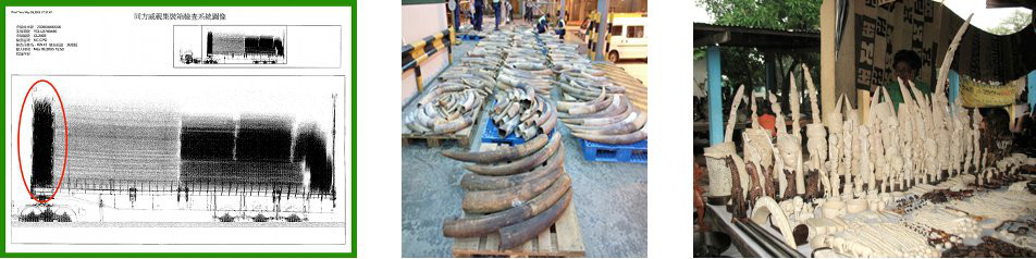 images of ivory seizures, African and Asian elephants